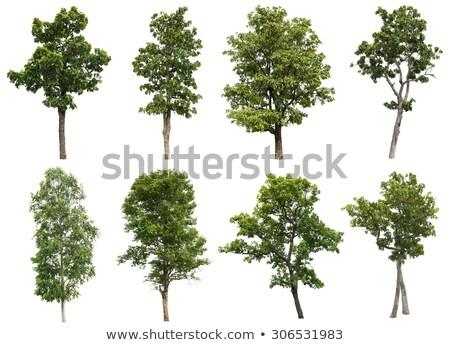 落葉性の · ツリー · 美しい · 公園 · 夏 · 空 - ストックフォト © zerbor