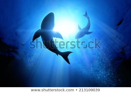 飢えた · サメ · 実例 · 着用 · フォーク - ストックフォト © konturvid