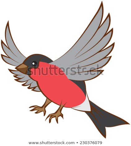 Flying bullfinch opened wings Stock photo © orensila