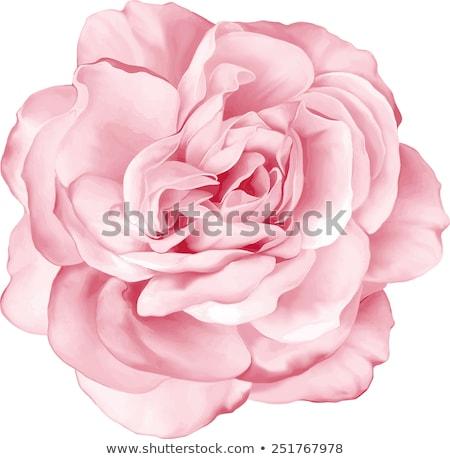 Vermelho flor-de-rosa pormenor flores rosa Foto stock © jeancliclac