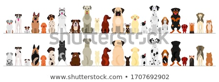 Dog Sitting Up Stock photo © cteconsulting