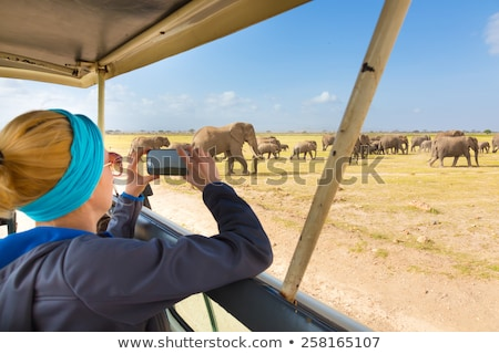 Woman on african wildlife safari. Stock photo © kasto
