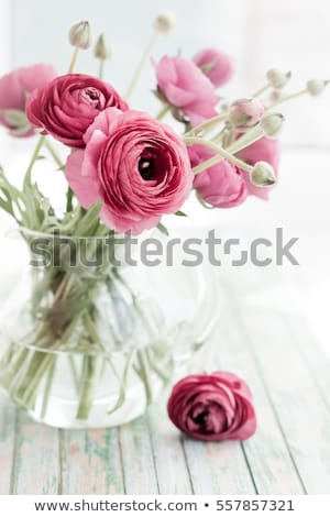 wedding pink ranunculus flowers stock photo © dariazu