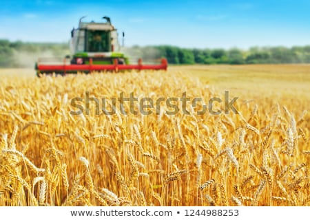 Stock photo: Combine Harvester in the Wheat Field