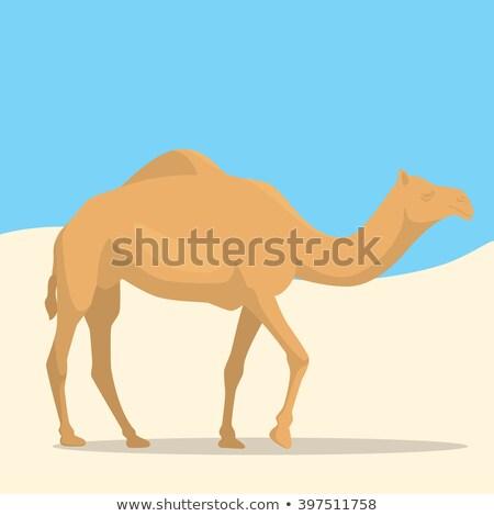 örnek deve çöl Umman metin dizayn Stok fotoğraf © w20er