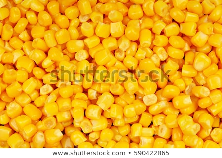 トウモロコシ いい 自然 自然 夏 ストックフォト © jonnysek