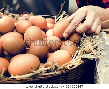 tavuk · yumurta · sepet · ahşap · doğa · arka · plan - stok fotoğraf © OleksandrO