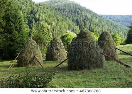 berg · weide · najaar · landschap · dorp · mooie - stockfoto © kotenko