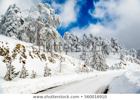Empty curved road passing through the snowy pine forest. Troodos Stock photo © Kirill_M