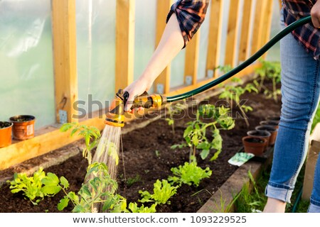Gardeners watering plants in hothouse Stock photo © dash