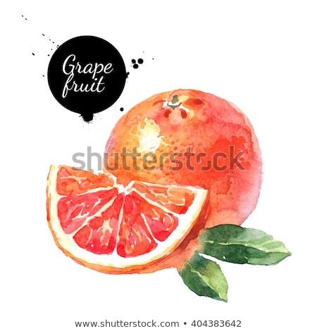 水彩画 実例 グレープフルーツ 全体 塗料 ストックフォト © Sonya_illustrations