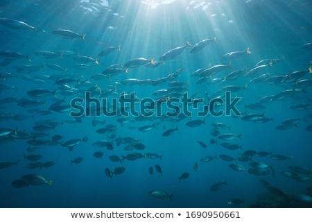 Jelenet sok hal vízalatti illusztráció tenger Stock fotó © colematt