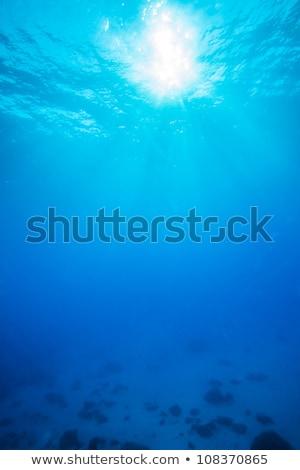 три подводного коралловый риф иллюстрация цветок рыбы Сток-фото © bluering