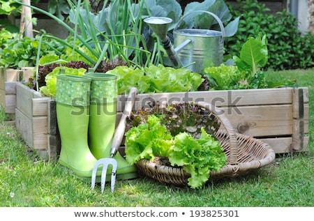 野菜 · パッチ · 庭園 · 広場 · 足 · ガーデニング - ストックフォト © virgin