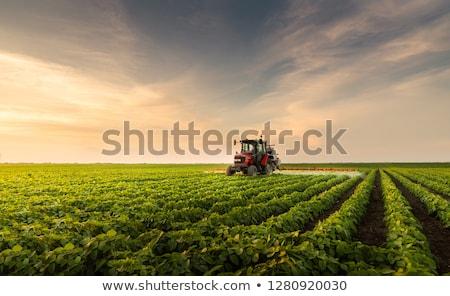 Green plants growing in field Stock photo © IS2