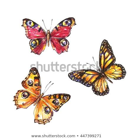Brand vlinder pauw vurig heldere zwarte Stockfoto © blackmoon979