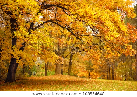 autumn fall colorful golden yellow leaves beech forest stock photo © lunamarina