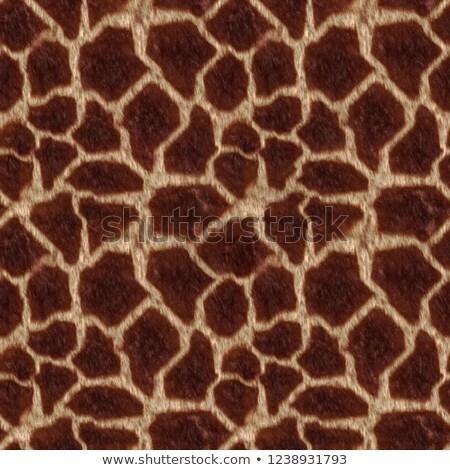 vektör · hayvan · cilt · model · zürafa · baskı - stok fotoğraf © sarts