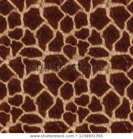 жираф кожи шаблон коричневый цвета текстуры Сток-фото © SArts