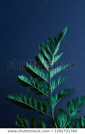 Natural layout made from fern leaves with spores on a blue background with space for text. Flat lay Stock photo © artjazz