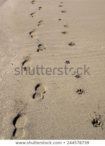 Pegadas homem cão transformar água coração Foto stock © ratkom