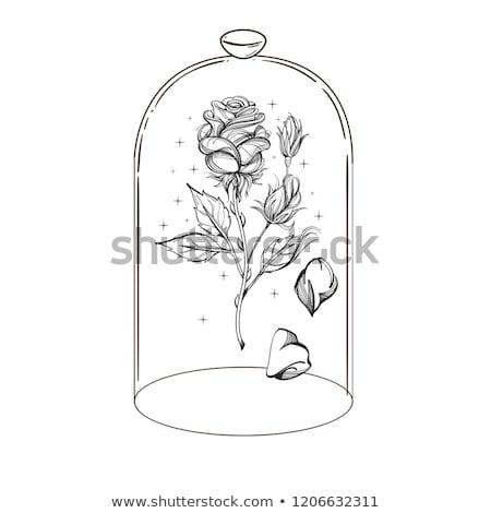 vector line rose, glass flask foto d'archivio © VetraKori
