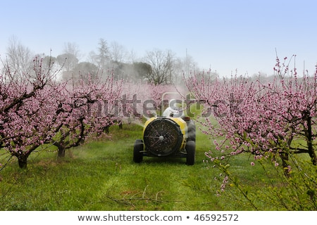 Tractor spraying insecticide or fungicide in peach orchard  Stock photo © simazoran