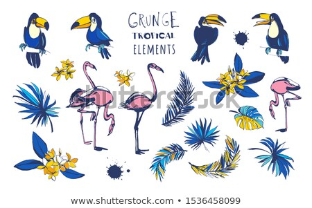 Tropical Summer Holiday Design with Toucan Bird and Parrot Flower on Blue Background. Vector Illustr Stock photo © articular