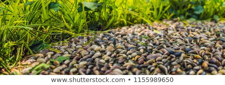 Piedras pavimento pie atención selectiva Foto stock © galitskaya