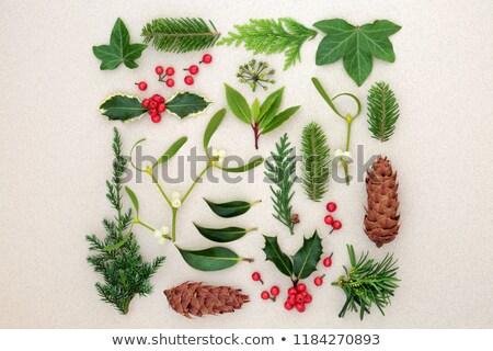 Tél karácsony növényvilág állatvilág absztrakt körkörös Stock fotó © marilyna