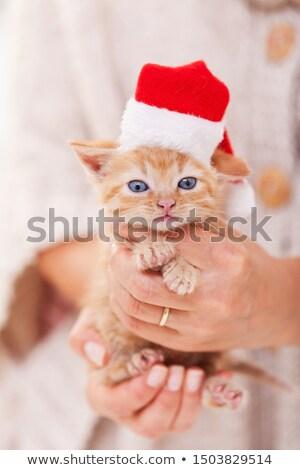 ベスト クリスマス ギフト かわいい 子猫 女性 ストックフォト © ilona75