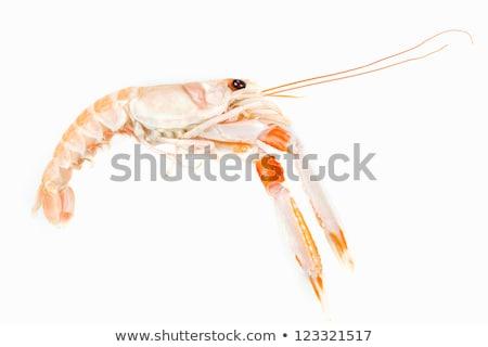 fresh raw Norway lobsters aka scampi Stock photo © nito