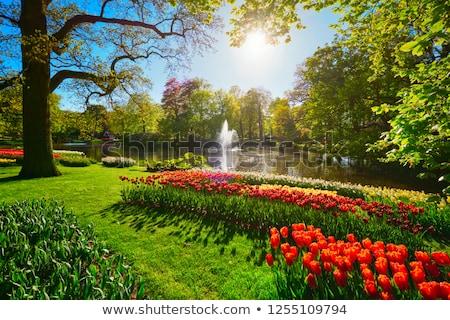Fontana tulipani Amsterdam Paesi Bassi acqua natura Foto d'archivio © borisb17