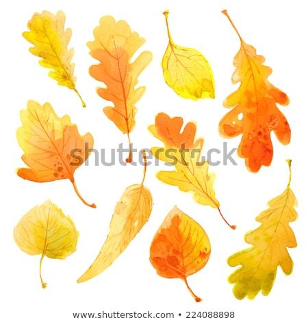 set · vettore · acquerello · rovere · foglie · bianco - foto d'archivio © Artspace