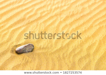 pebble lying on texture of yellow sand dunes stock photo © vapi
