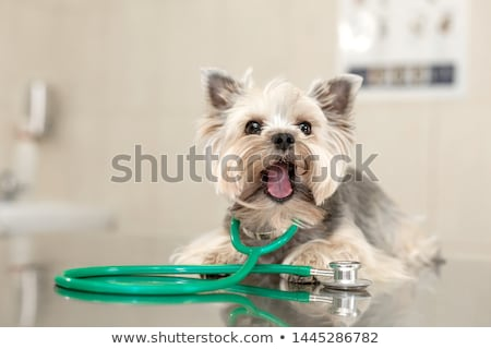 Funny dog at vet clinic Stock photo © jossdiim