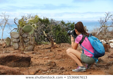 Galapagos tourist taking pictures of Land Iguana eating plant on North Seymour Stock photo © Maridav