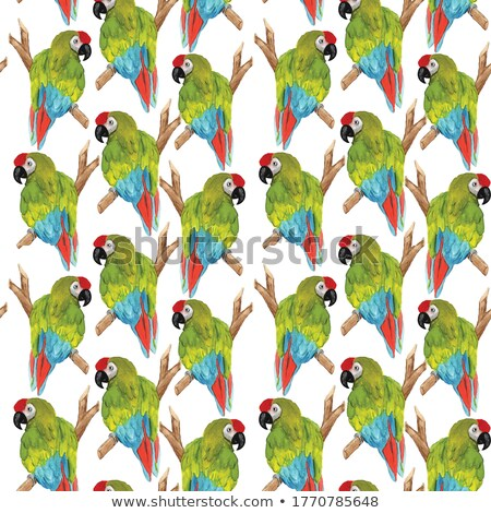 Birds of America- pets and wild birds seamless watercolor background Stock photo © shawlinmohd
