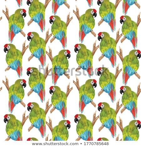 Aves américa animais de estimação sem costura aquarela Foto stock © shawlinmohd