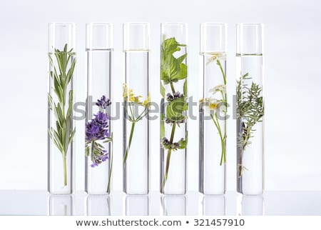 Сток-фото: Flowers And Plants In Test Tubes