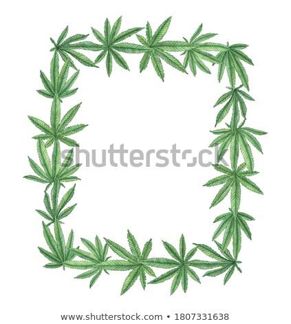 大麻 葉 フレーム マリファナ 広告 医療 ストックフォト © -TAlex-