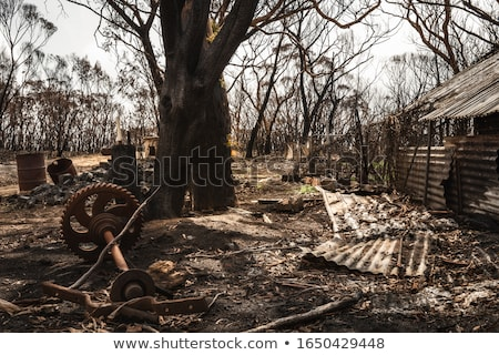 After the bush fires comes rain in  Australia Stock photo © lovleah