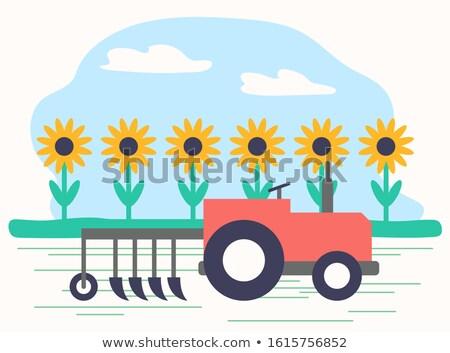 Combine Machine Working On Sunflower Field Vector Stock photo © robuart