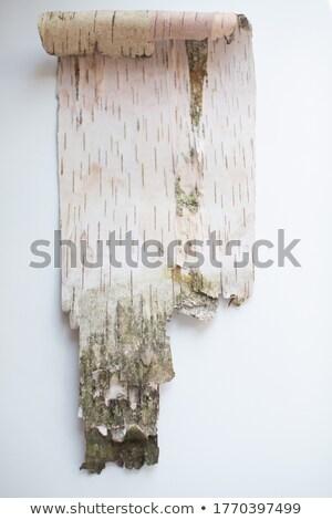 peeling bark detail Stock photo © prill