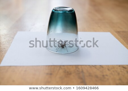 spider under a drinking glass Stock photo © prill