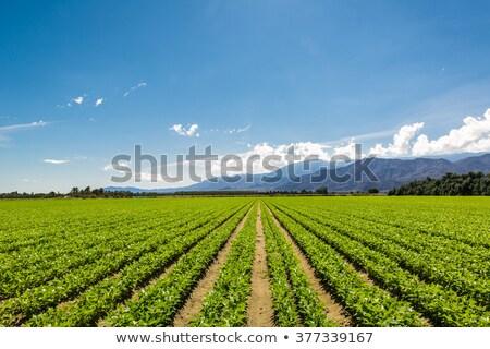 Kaliforniya alan dağ manzara dağlar çit Stok fotoğraf © saje