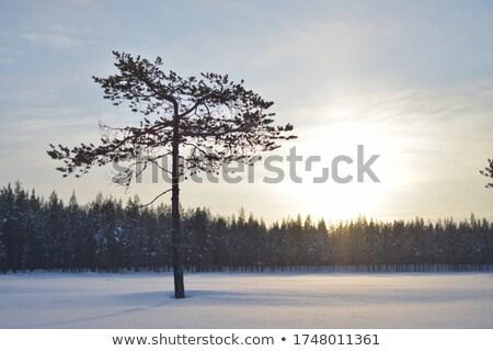 Egyedüli fa kék egyedül homokkő szirt Stock fotó © emattil