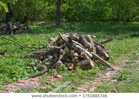 дерево · древесины · аннотация · природы · оранжевый - Сток-фото © serge001