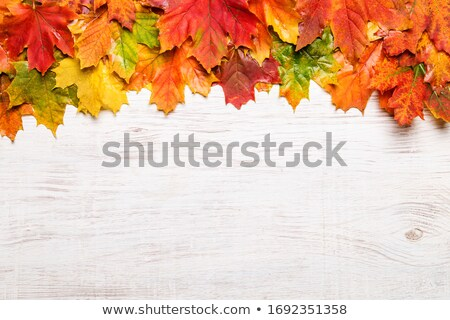 autumn background with text space Stock photo © marinini