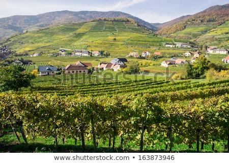 región · bajar · Austria · carretera · coches - foto stock © phbcz